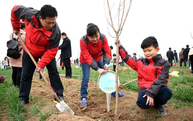 安徽亳州:亲子植树乐